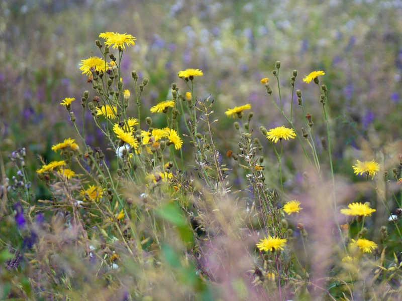 Glyphosat und andere Herbizide können die Artenvielfalt beeinträchtigen