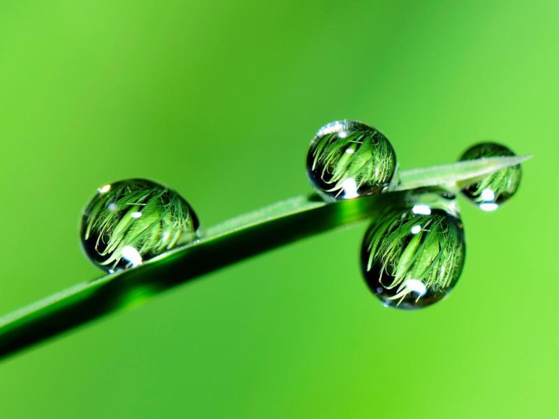 Bei Glyphosat - und bei Herbiziden ganz allgemein - findet allmählich ein Umdenken statt